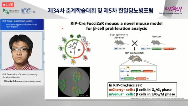 교토 대학 도쿠 모토 신스케 교수는 같은 컨퍼런스에서 당뇨병의 진행을 개선 할 수있는 베타 세포 증식을 평가하는 데 사용되는 새로운 동물 모델을 발표하고 있습니다.